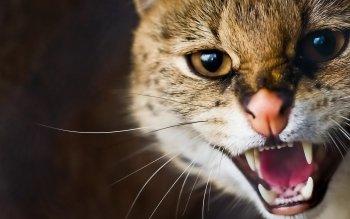 Savannah cat hd зурган илэрцүүд