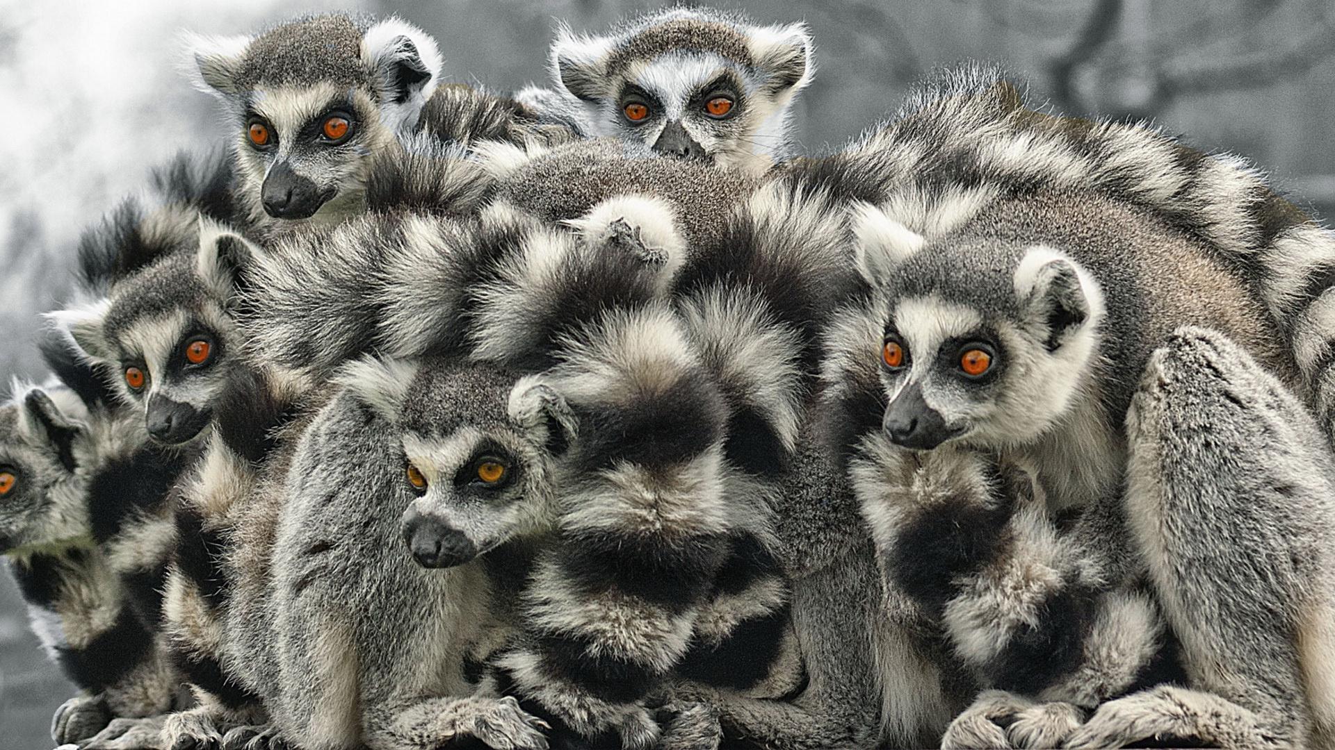 download wallpaper 3840x2160 lemur - photo #11
