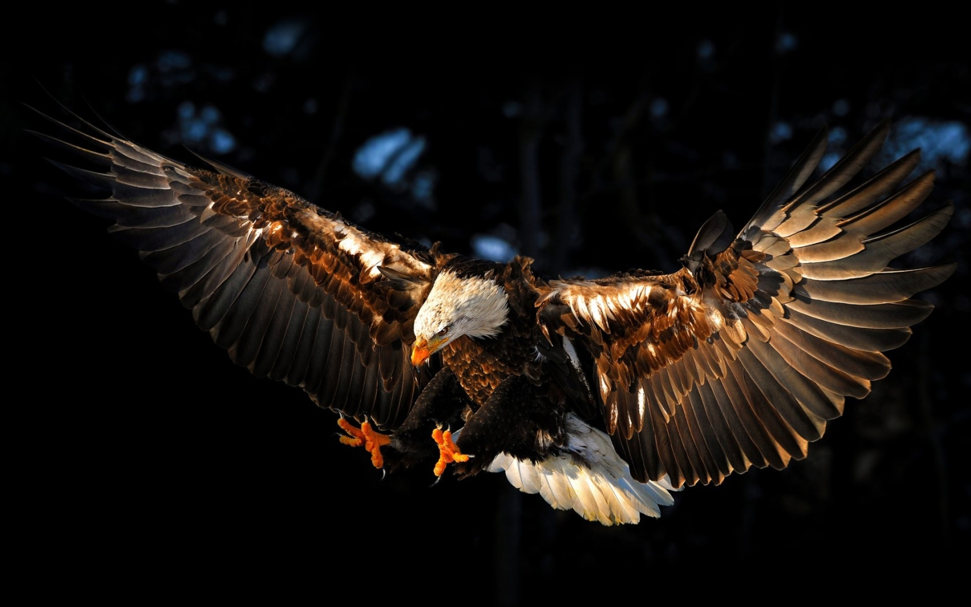 eagle 1280x1024 wallpaper - photo #47