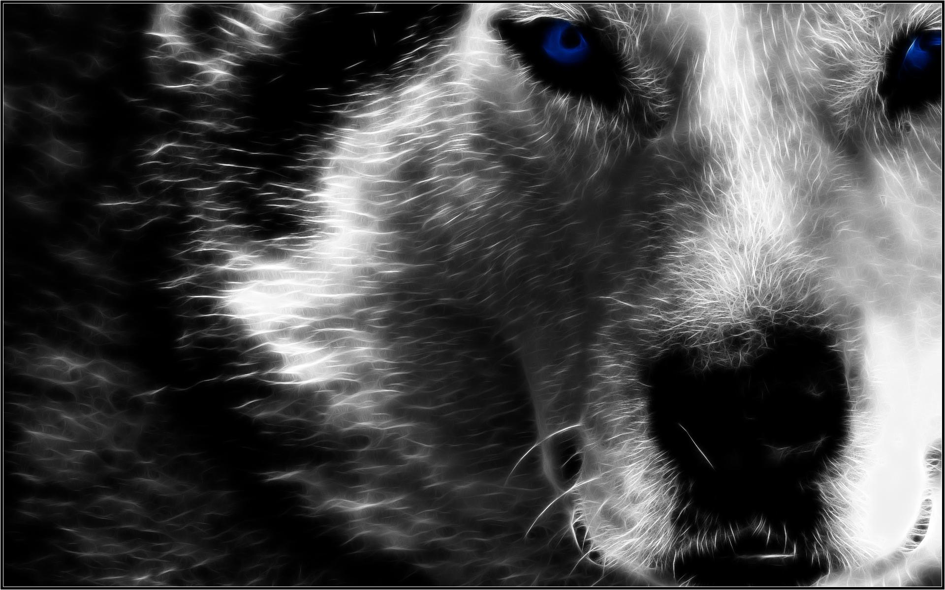 Animal Para Fondo De Pantalla: Fractal Wolf Fondo De Pantalla HD