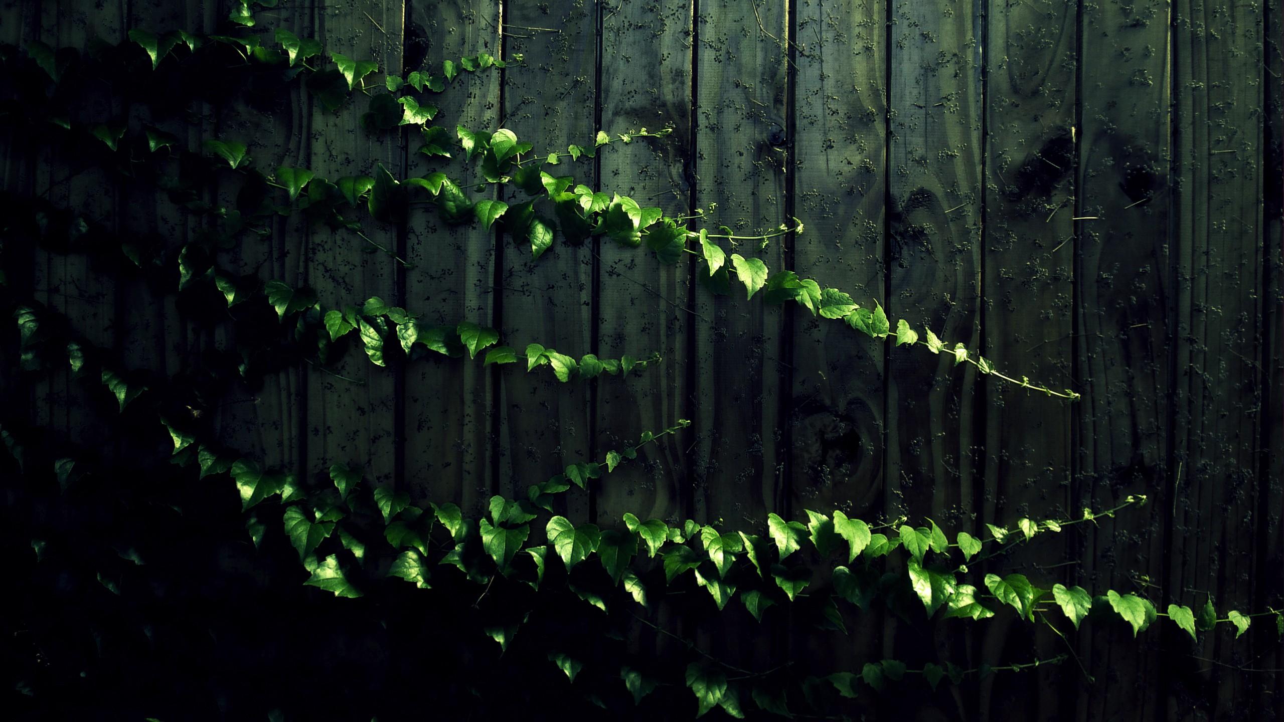 Fence Background Wallpaper : Creeping Vine Computer Wallpapers, Desktop Backgrounds  2560x1440 ...