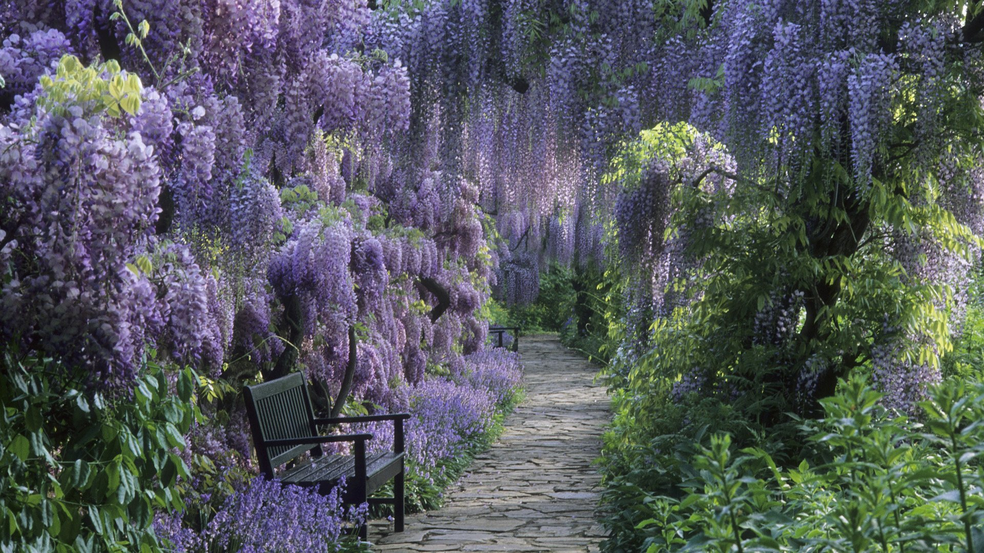Photography - Park  Earth Flower Purple Flower Spring Wisteria Bench Path Wallpaper