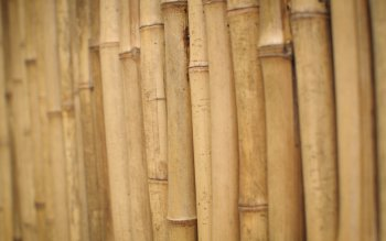 Pattern - Wood Wallpapers and Backgrounds ID : 375244