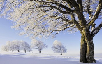 Tierra - Winter Wallpapers and Backgrounds ID : 376435