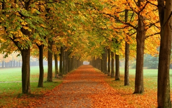 Aarde - Herfst Wallpapers and Backgrounds ID : 379092
