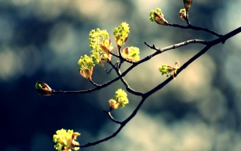 Earth - Blossom Wallpapers and Backgrounds ID : 379527