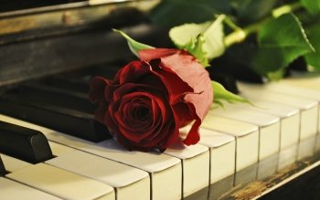 Musik - Piano Wallpapers and Backgrounds ID : 383278
