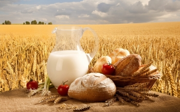 Food - Bread Wallpapers and Backgrounds ID : 383333
