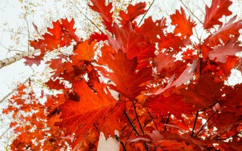 Earth - Autumn Wallpapers and Backgrounds ID : 384993