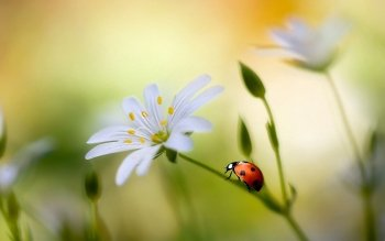 Animal - Ladybug Wallpapers and Backgrounds ID : 386159