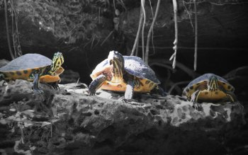 Animal - Turtle Wallpapers and Backgrounds ID : 386289