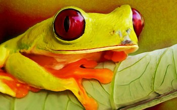 Animal - Tree Frog Wallpapers and Backgrounds ID : 386514