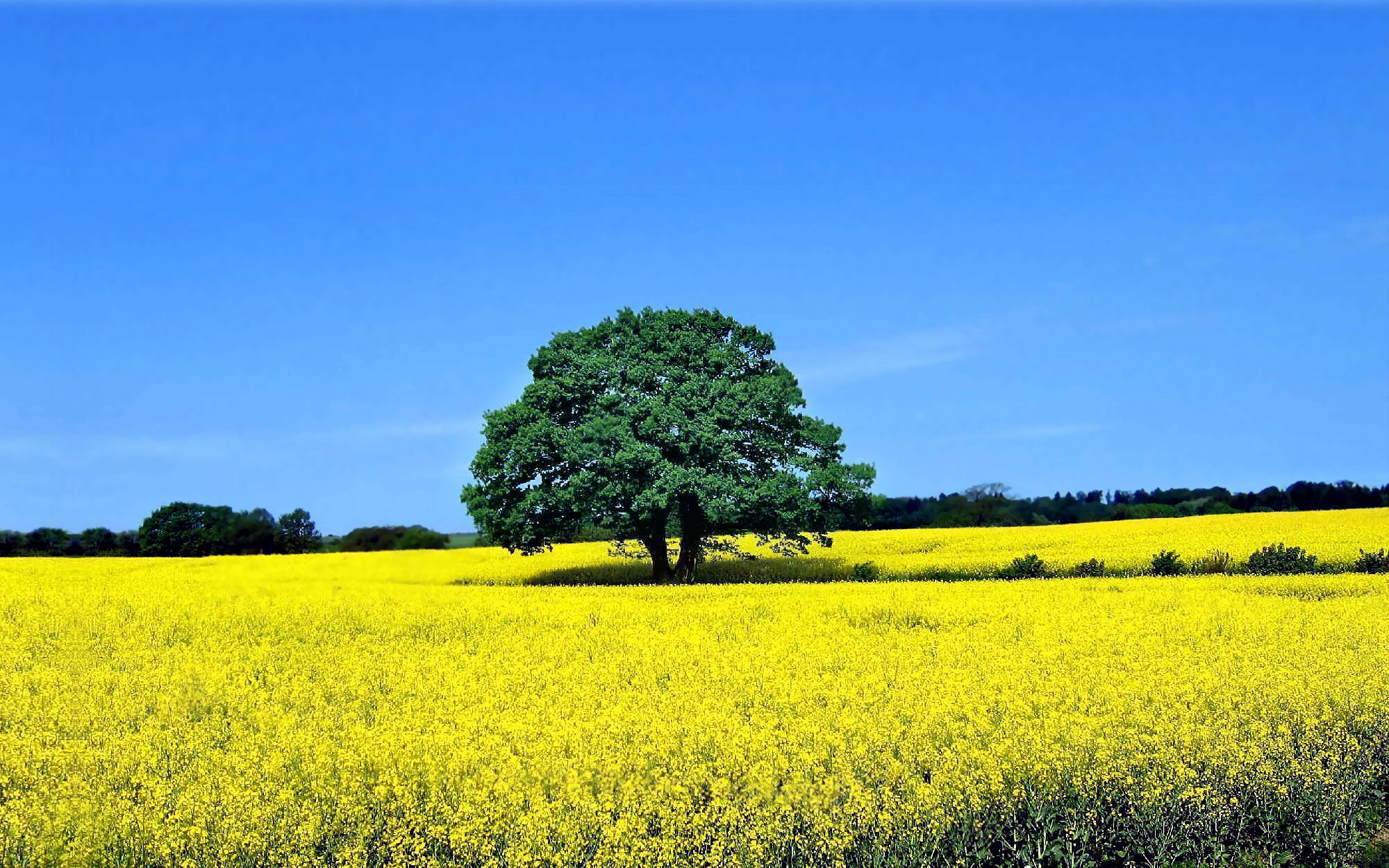 1254 Yellow Flower Hd Wallpapers Background Images Wallpaper Abyss