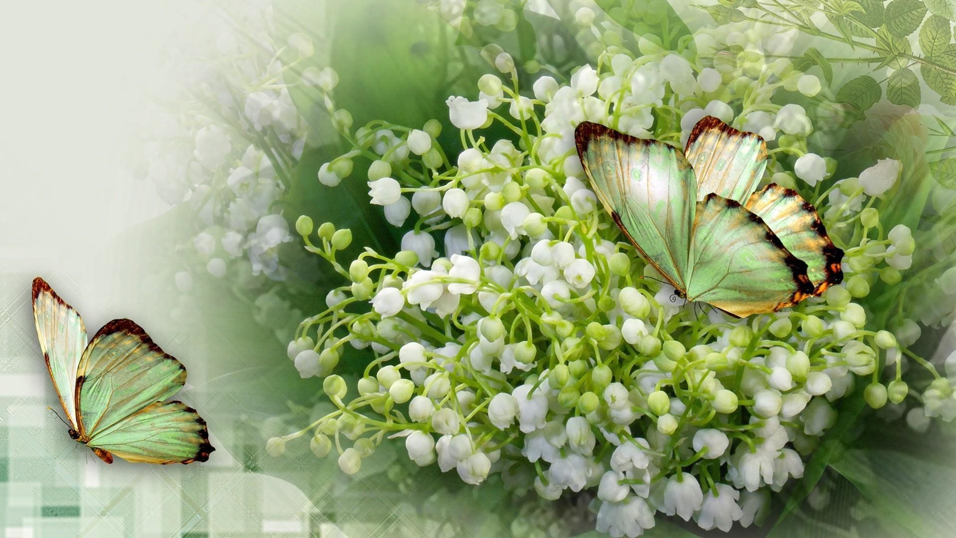 Wallpapers ID:388437