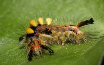 Animal - Caterpillar Wallpapers and Backgrounds ID : 391537