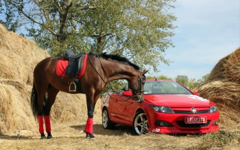 Photography - Horse And Car Wallpapers and Backgrounds ID : 393796