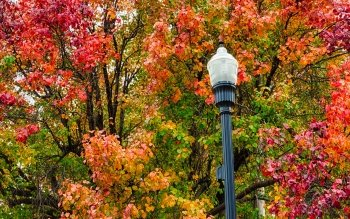 Man Made - Lamp Post Wallpapers and Backgrounds ID : 394333