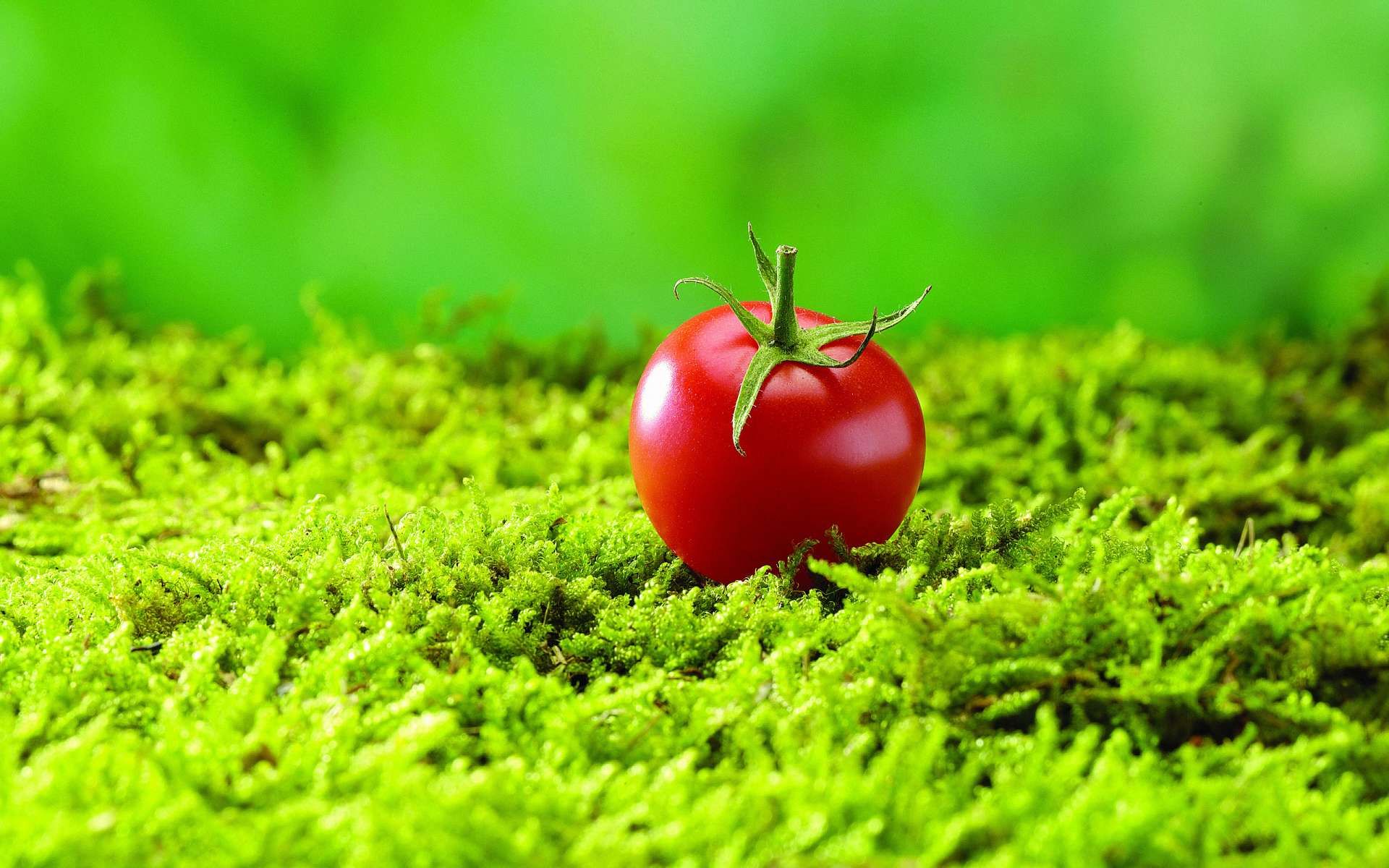Tomato Full HD Wallpaper and Background  1920x1200  ID:396587