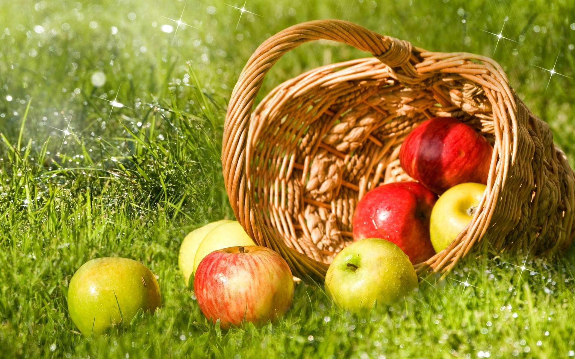 обои на рабочий стол яблоки осенью