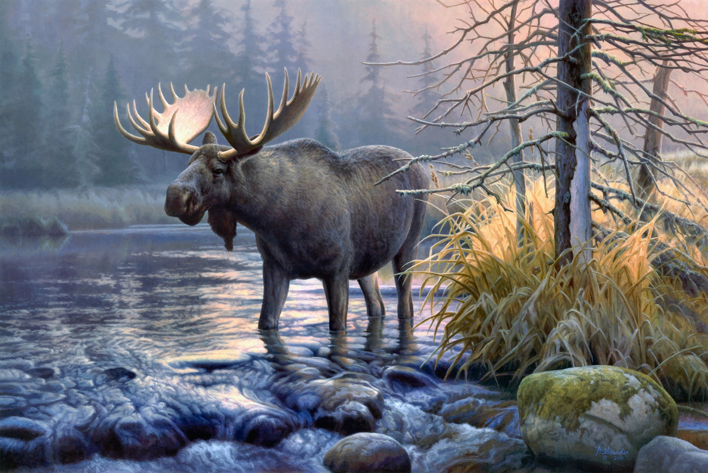 moose hd wallpaper - photo #10