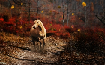 Animal - Horse Wallpapers and Backgrounds ID : 397197