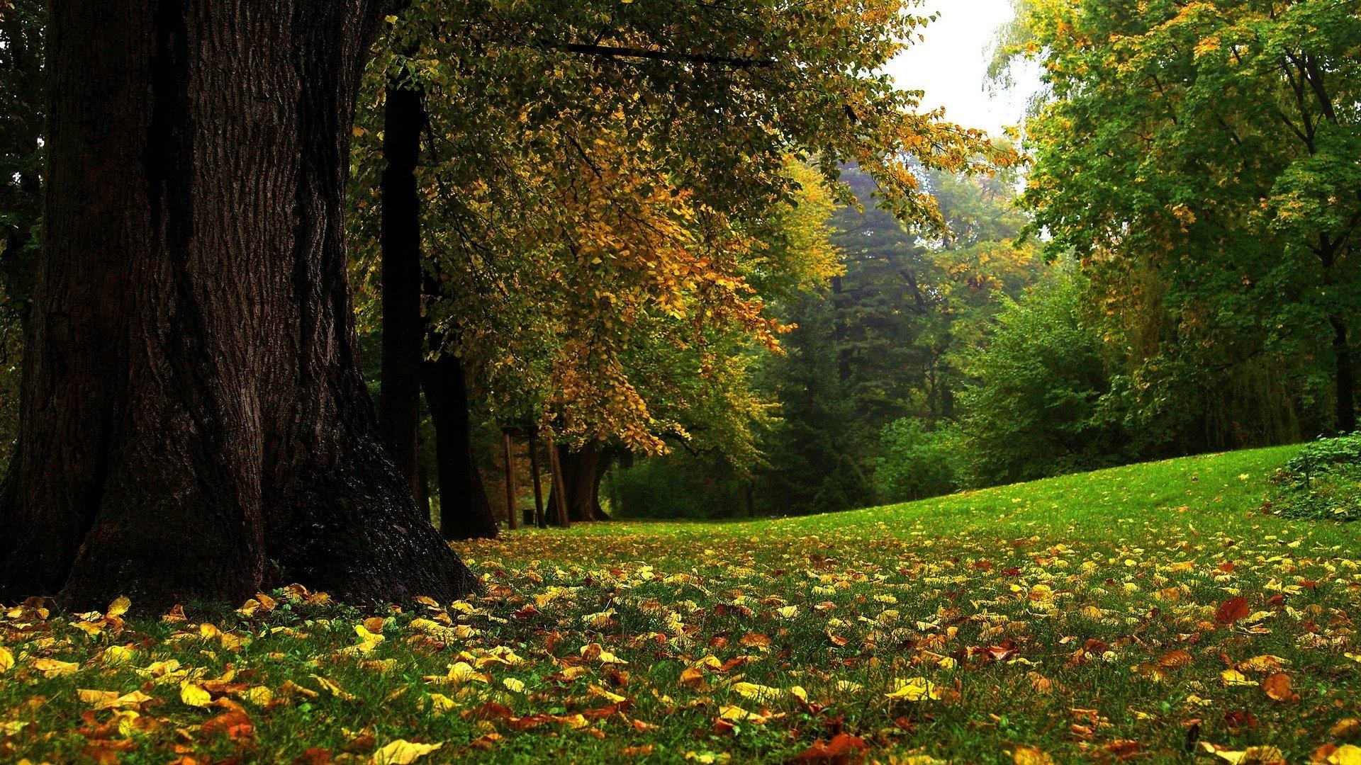 Bosque Fondo De Pantalla Hd Fondo De Escritorio 1920x1080