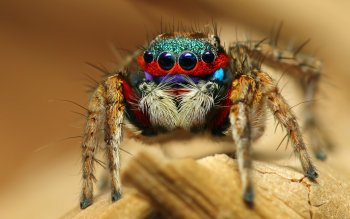 Animal - Spider Wallpapers and Backgrounds ID : 399081