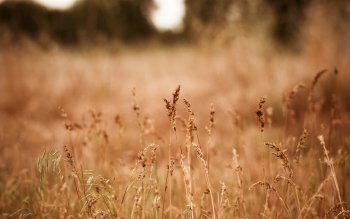 Earth - Grass Wallpapers and Backgrounds ID : 399857