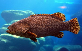 Animal - Fish Wallpapers and Backgrounds ID : 401654