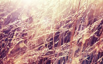 Earth - Grass Wallpapers and Backgrounds ID : 401696