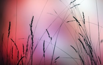 Earth - Grass Wallpapers and Backgrounds ID : 401697