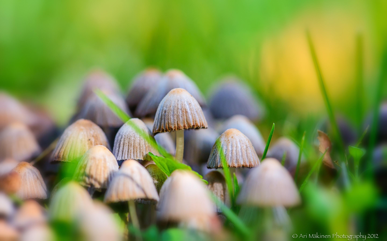 mushroom family wallpaper desktop - photo #20