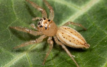 Animal - Spider Wallpapers and Backgrounds ID : 404105
