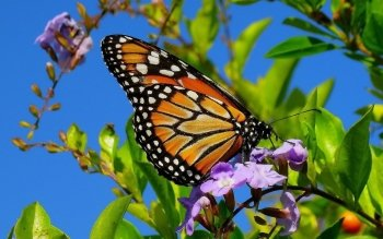 Animal - Butterfly Wallpapers and Backgrounds ID : 404929