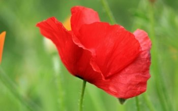 Earth - Poppy Wallpapers and Backgrounds ID : 404945