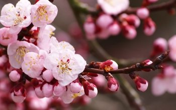 Earth - Blossom Wallpapers and Backgrounds ID : 405256