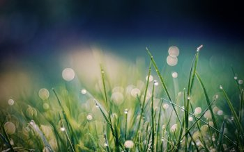 Earth - Grass Wallpapers and Backgrounds ID : 406023