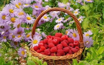 Food - Raspberry Wallpapers and Backgrounds ID : 406392