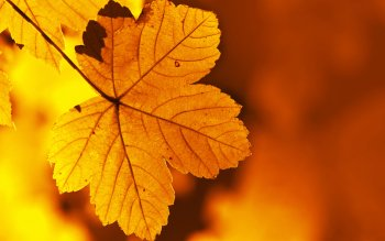 Earth - Leaf Wallpapers and Backgrounds ID : 406868