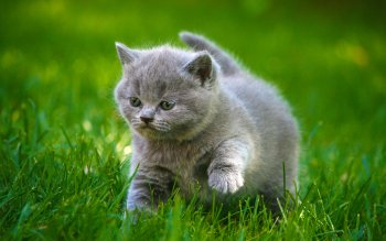 Animal - Cat Wallpapers and Backgrounds ID : 408941