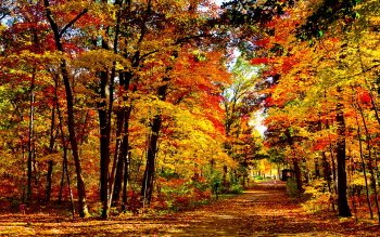 Photography - Autumn Wallpapers and Backgrounds ID : 409770