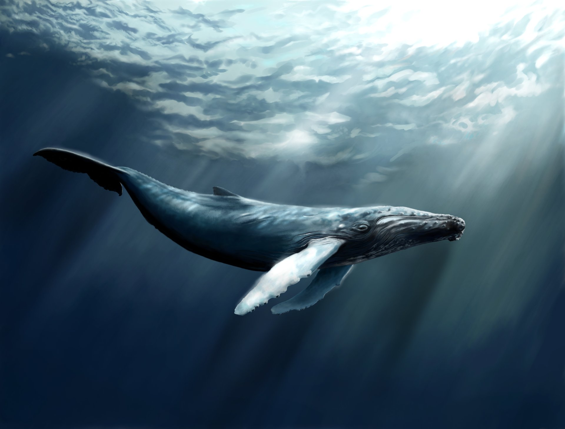 119 Whale Hd Wallpapers Background Images Wallpaper Abyss