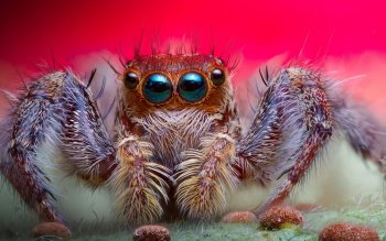 Animalia - Spider Wallpapers and Backgrounds ID : 412076
