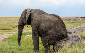 Animalia - Elefante Wallpapers and Backgrounds ID : 412160