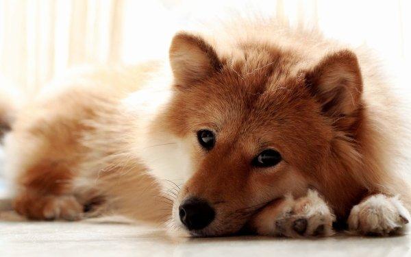 Animal Dog Dogs HD Wallpaper | Background Image