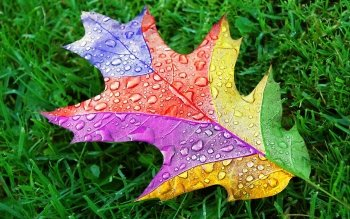 Earth - Leaf Wallpapers and Backgrounds ID : 413750
