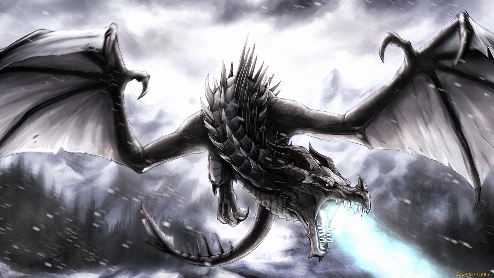 Black Dragon  Computer Wallpapers Desktop Backgrounds