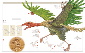 Animal - Archaeopteryx Wallpapers and Backgrounds ID : 415943