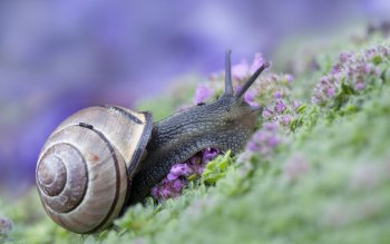 Animalia - Snail Wallpapers and Backgrounds ID : 416172