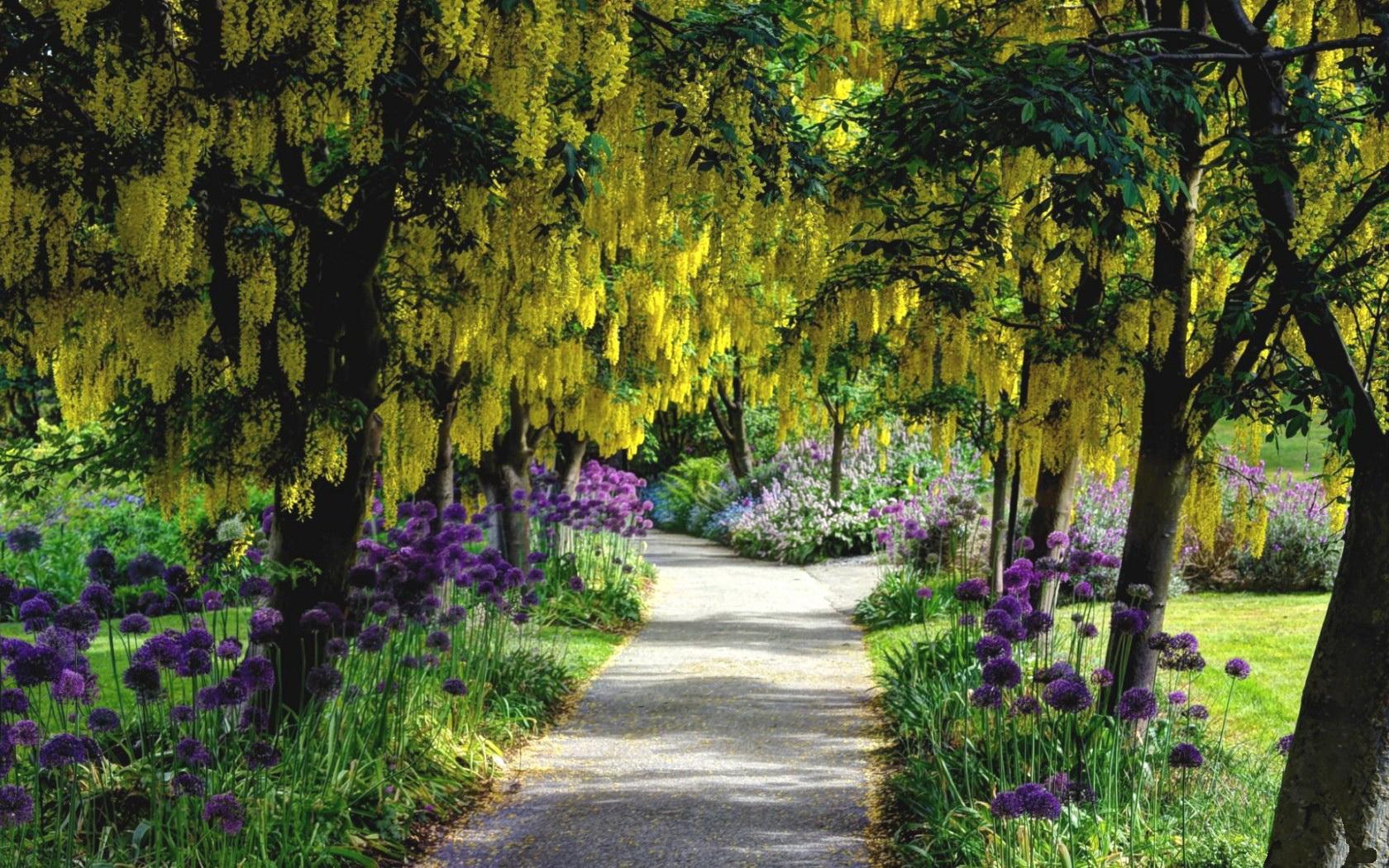 Jardin fonds d 39 cran arri res plan 1680x1050 id 417453 - Fond d ecran jardin anglais ...